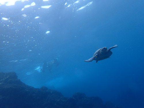 八重根でウミガメ見て周り