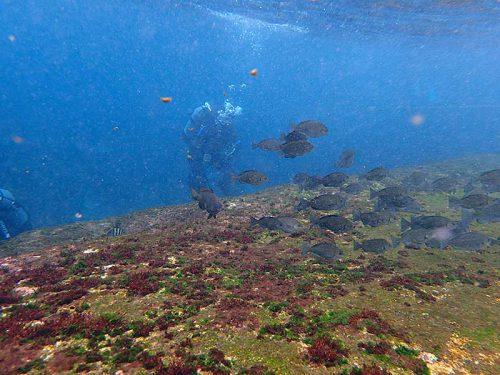 波打ち際にはたくさん魚も集まっていて