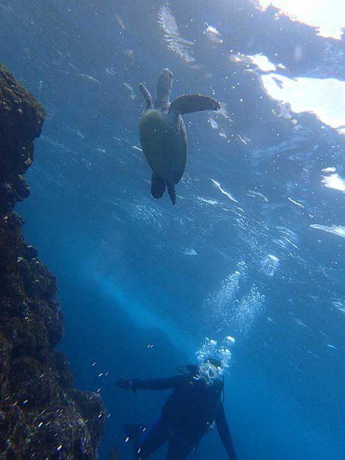 呼吸しに上がって行ってウミガメ見たり