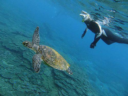 底土の海でウミガメと一緒に泳いで周り