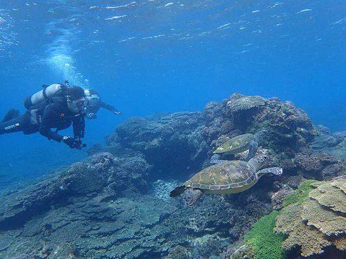 戻り際にもウミガメ集まってたので見てみたり