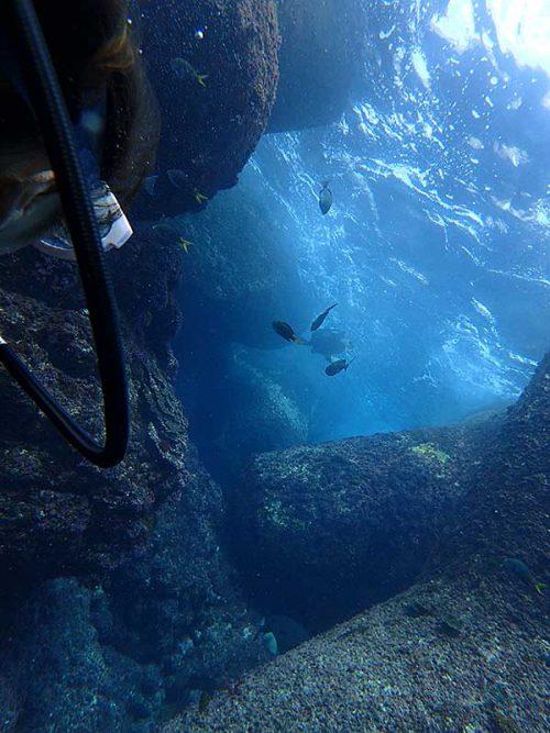 テトラの隙間でお食事していたアオウミガメ