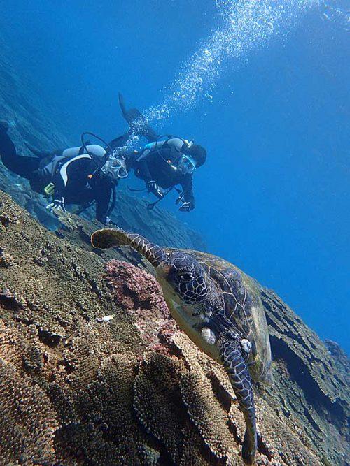 ちっこいウミガメ見てみたり