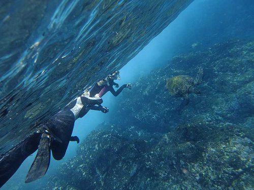 浅場に集まってたアオウミガメとか見て周り