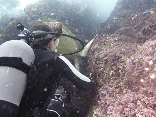 海草食べてるウミガメ眺め