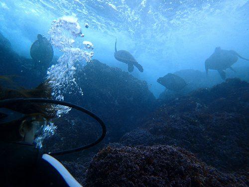 波打ち際にウミガメたくさん集まってたり