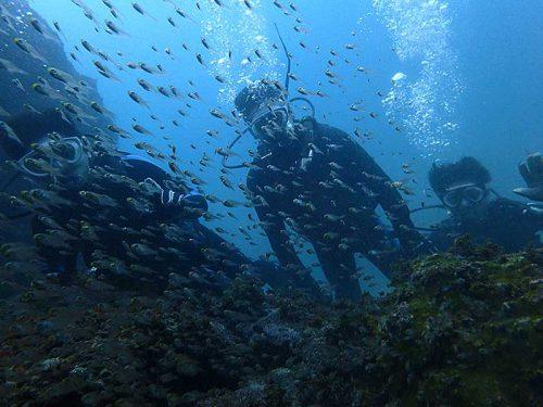 集まる魚もみんなで眺め