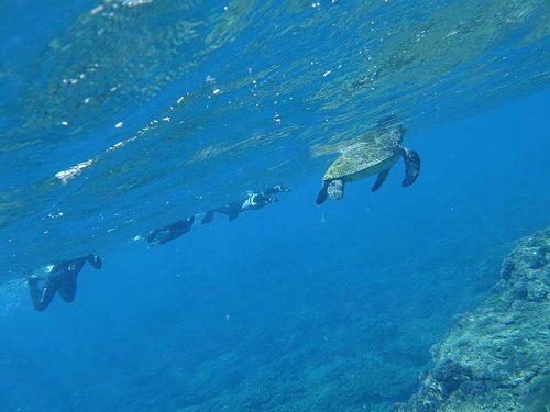 水面付近に呼吸しに上がってきていたウミガメ見たり