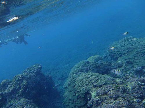 根上に集まる魚達とか見て周り