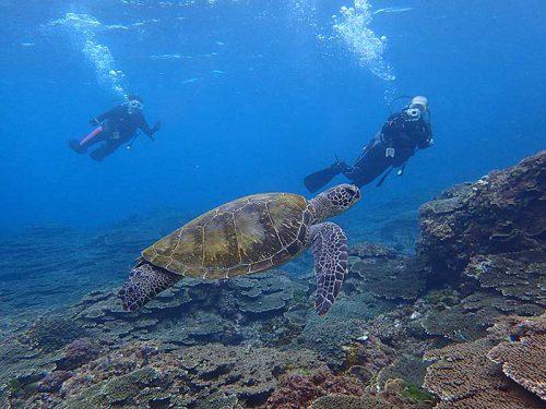 底土の海でウミガメと一緒に体験ダイビング