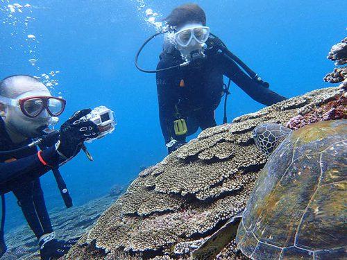 サンゴの隙間からこちらを伺ってたアオウミガメ