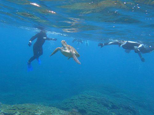 水面付近に上がってきていたアオウミガメ