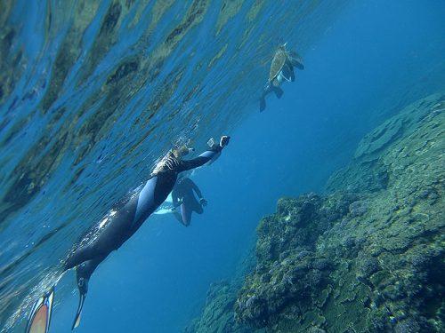 呼吸しに上がってきていたウミガメ見たり