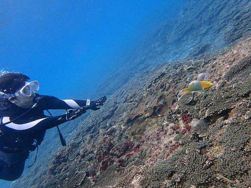 綺麗な魚を見つつ海に慣れ