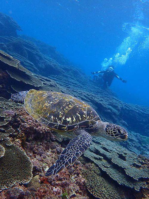 ウミガメ探して泳いで周り