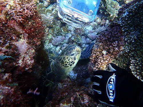 岩の隙間で休憩していたウミガメも眺めてみたり