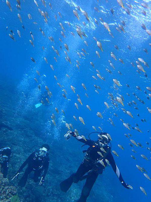 キホシスズメダイの群れの中を泳いでみたり