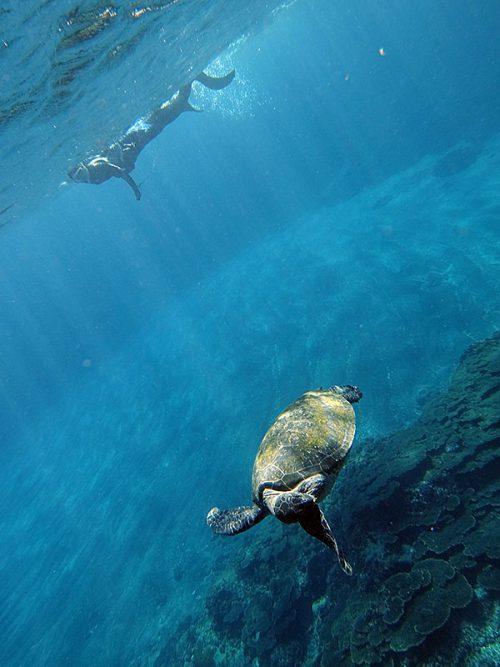 わきの下をモゾモゾしてたアオウミガメ