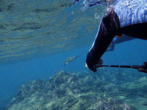 ゆっくり近づきウミガメ撮ったり