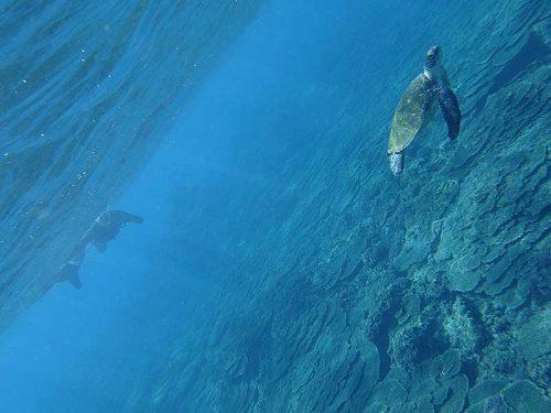 ちょっと泳いでウミガメ見たり