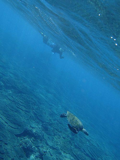 ウミガメと一緒に少し泳いで周っていって
