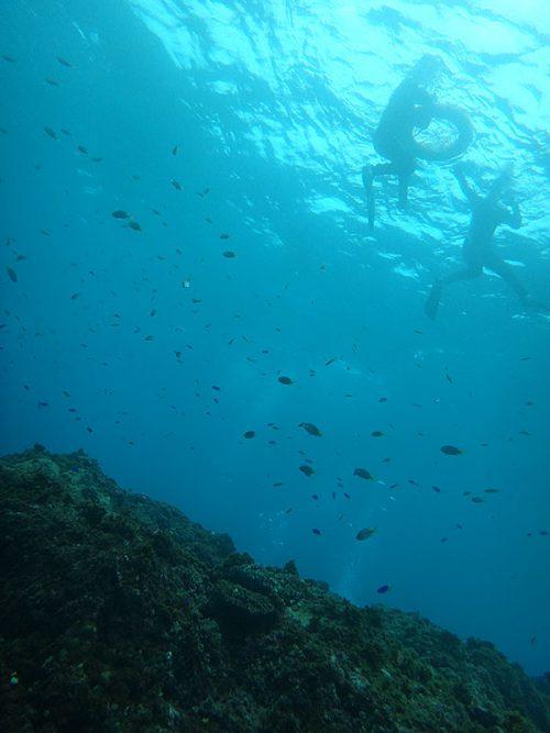 キホシスズメダイとか集まる魚も見て周り