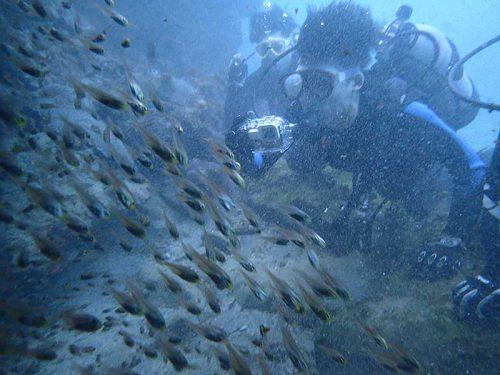 小穴の中に集まってる魚達とか