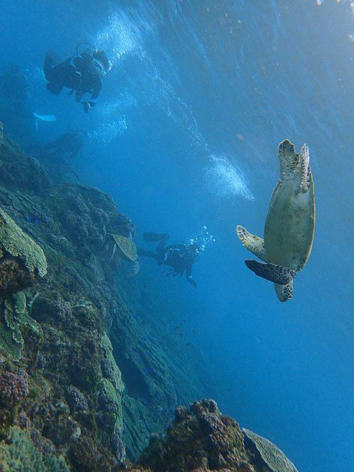ちょっと泳げばウミガメ2匹見かけたり