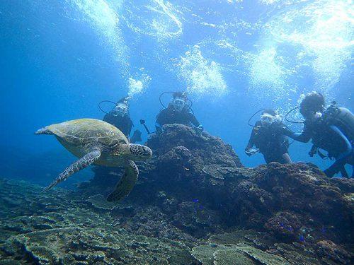 のんびりしていたウミガメをみんなで眺め