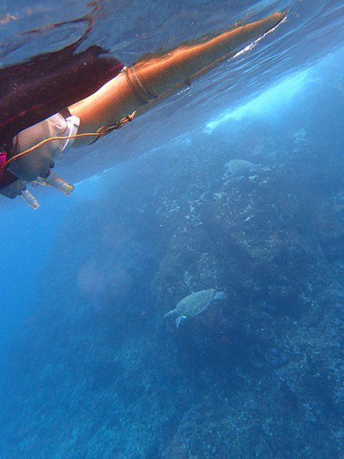 浅場で食事していたウミガメ達