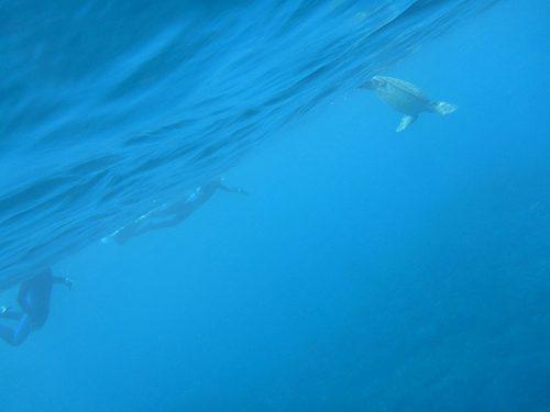 みんなでカメと一緒に泳いで周り