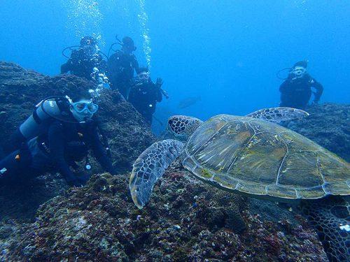 沖から泳いできていたアオウミガメをみんなで見たり
