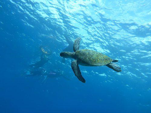 八重根の海でカメと一緒にシュノーケリング