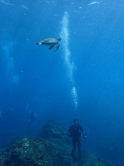 頭の上をウミガメ泳いでおりまして