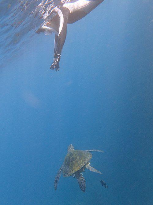 上からウミガメ眺めてみたり