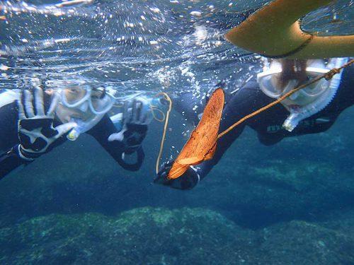 水面付近にはナンヨウツバメウオ