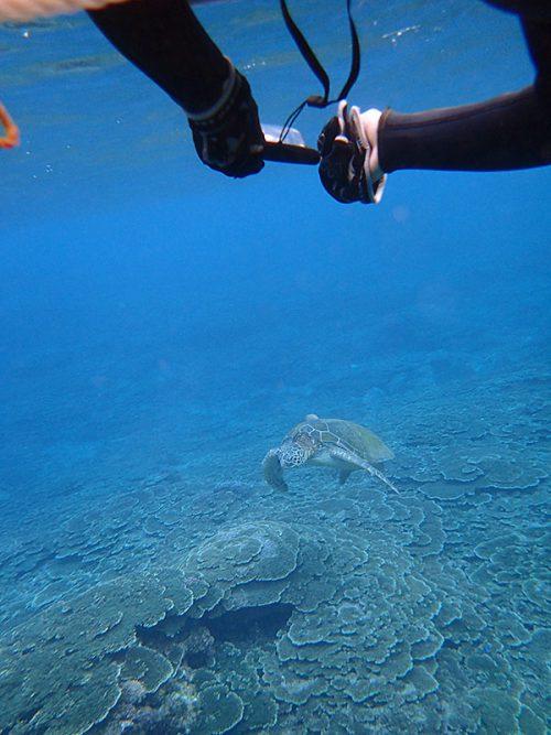のんびり浮いてたアオウミガメ