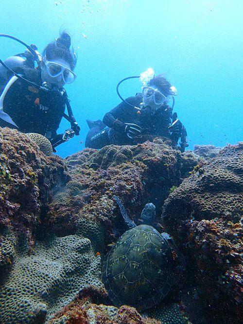 岩の隙間で休憩していたウミガメ見つけ