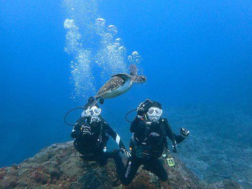 目の前泳ぐちっこいウミガメ