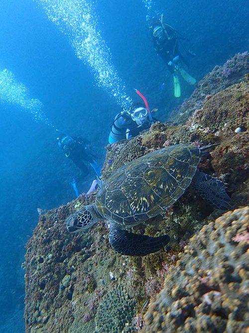 根上にいたちっこいウミガメ