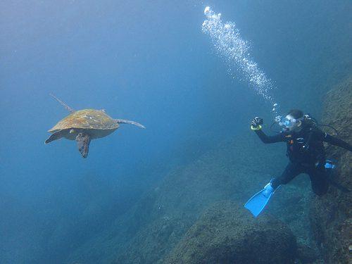 横切るウミガメ撮ってもみたり