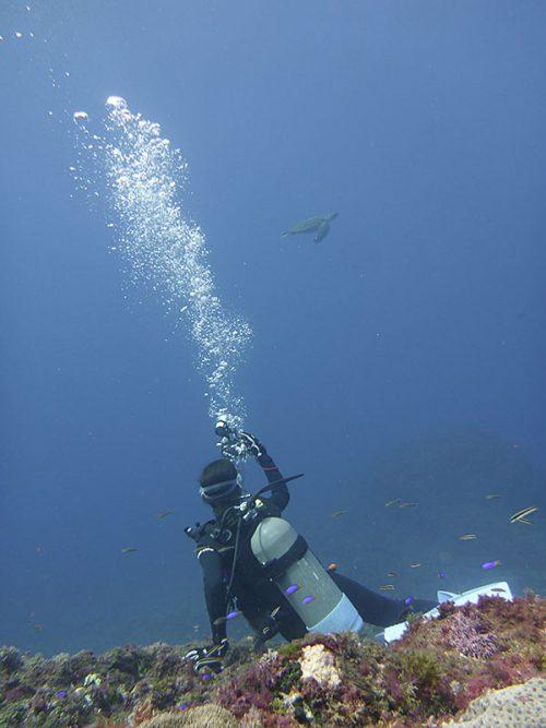 遠くで泳ぐウミガメ見かけ