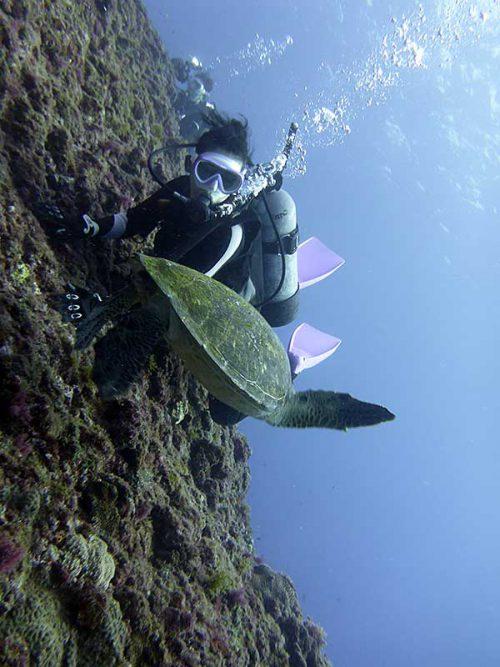 横切るウミガメ見てみたり