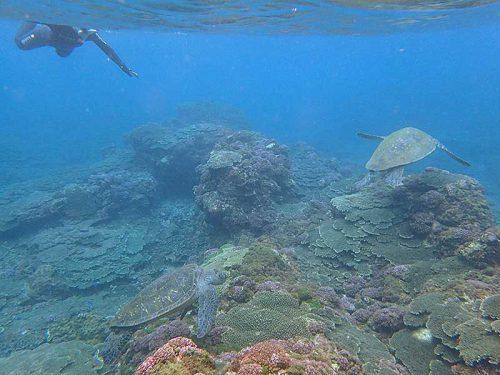 根上に集まるアオウミガメ