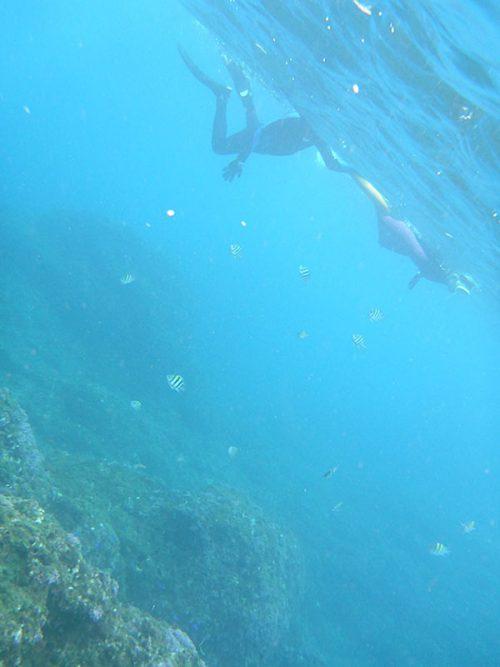 根上で集まる魚も見たり