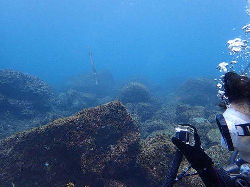 細長い魚とか見ながら海に慣れてき