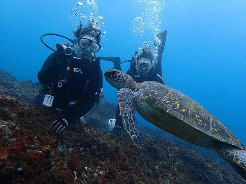 ゆっくりと目の前横切るアオウミガメ
