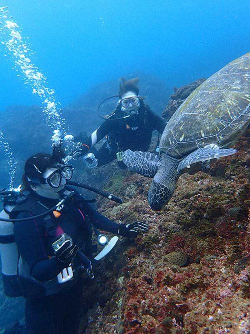 目の前で海草食べてたアオウミガメ