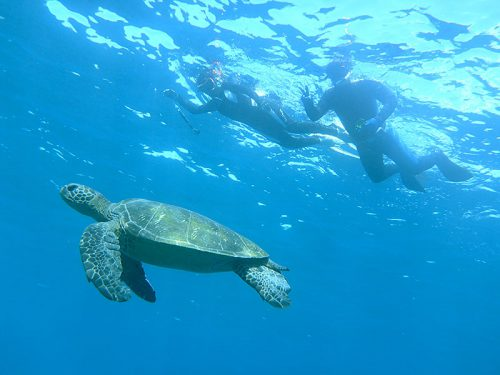 ウミガメと一緒に八重根の海でシュノーケリング