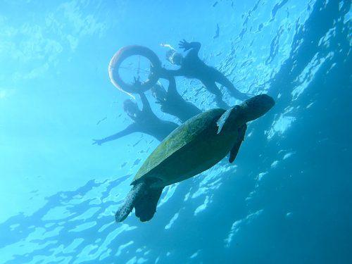 沖を周ってウミガメ眺め